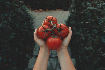 10 Khasiat Tomat, Kamu Wajib Tahu! 2