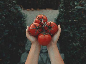 10 Khasiat Tomat, Kamu Wajib Tahu! 7