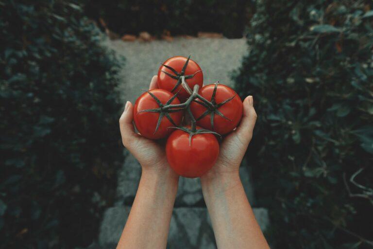 10 Khasiat Tomat, Kamu Wajib Tahu! 1