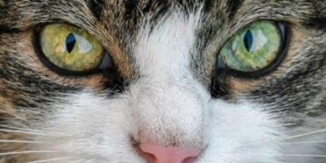 Cerpen - Mata Kucing 13