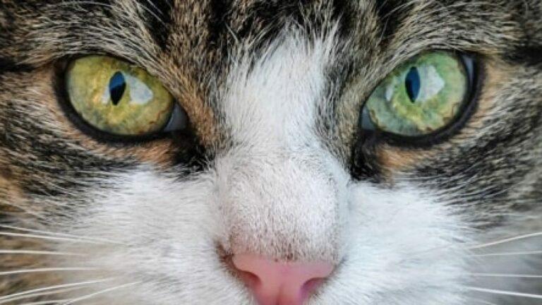 Cerpen - Mata Kucing 1