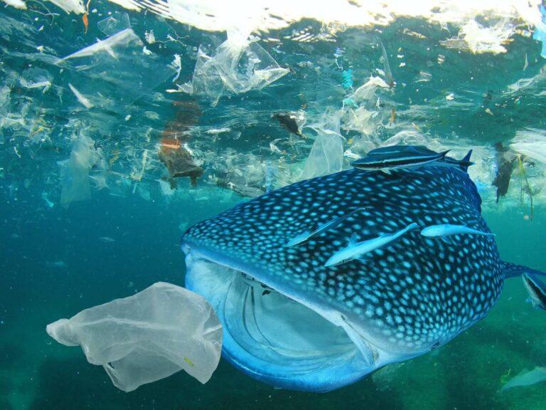Mengapa Satwa Laut Selalu Memakan Plastik? 1