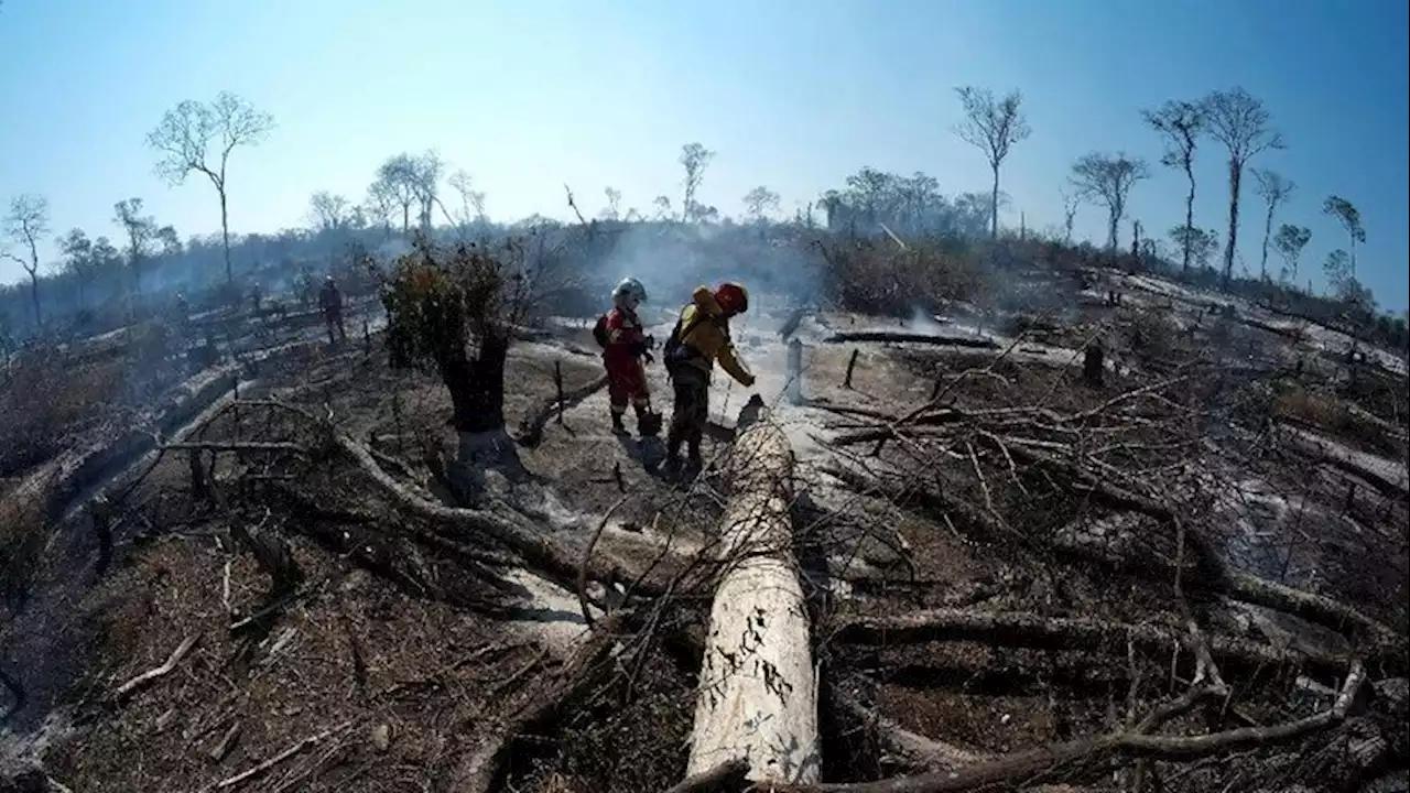 Deforestasi hutan Amazon berkurang karena pembatasan aktivitas manusia dalam era Covid-19. (dok. headtopics)
