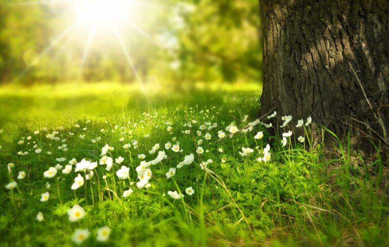 Cerpen - Rindu Yang Hilang di Suatu Taman 1