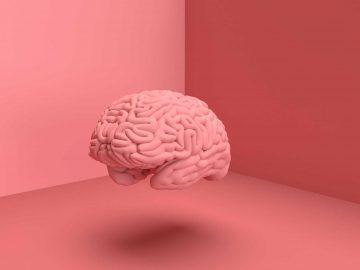 Bagian-Bagian Dan Penyebab Kerusakan Pada Otak Manusia 4