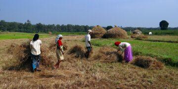 Pemiskinan Petani Padi Di Indonesia 16