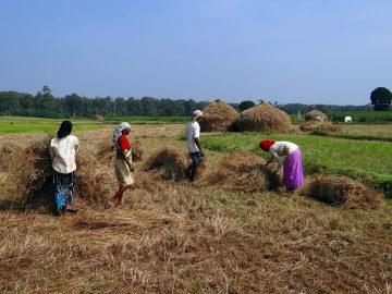 Pemiskinan Petani Padi Di Indonesia 3