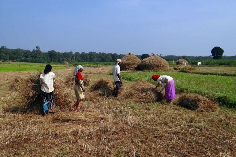 Pemiskinan Petani Padi Di Indonesia 1