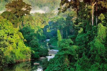 'Pukung Pahewan', Peninggalan Suku Dayak Yang Terancam Punah 8