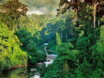 'Pukung Pahewan', Peninggalan Suku Dayak Yang Terancam Punah 5