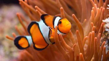 Apakah Ikan Tidur dengan Mata Terbuka? 1