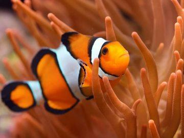 Apakah Ikan Tidur dengan Mata Terbuka? 4