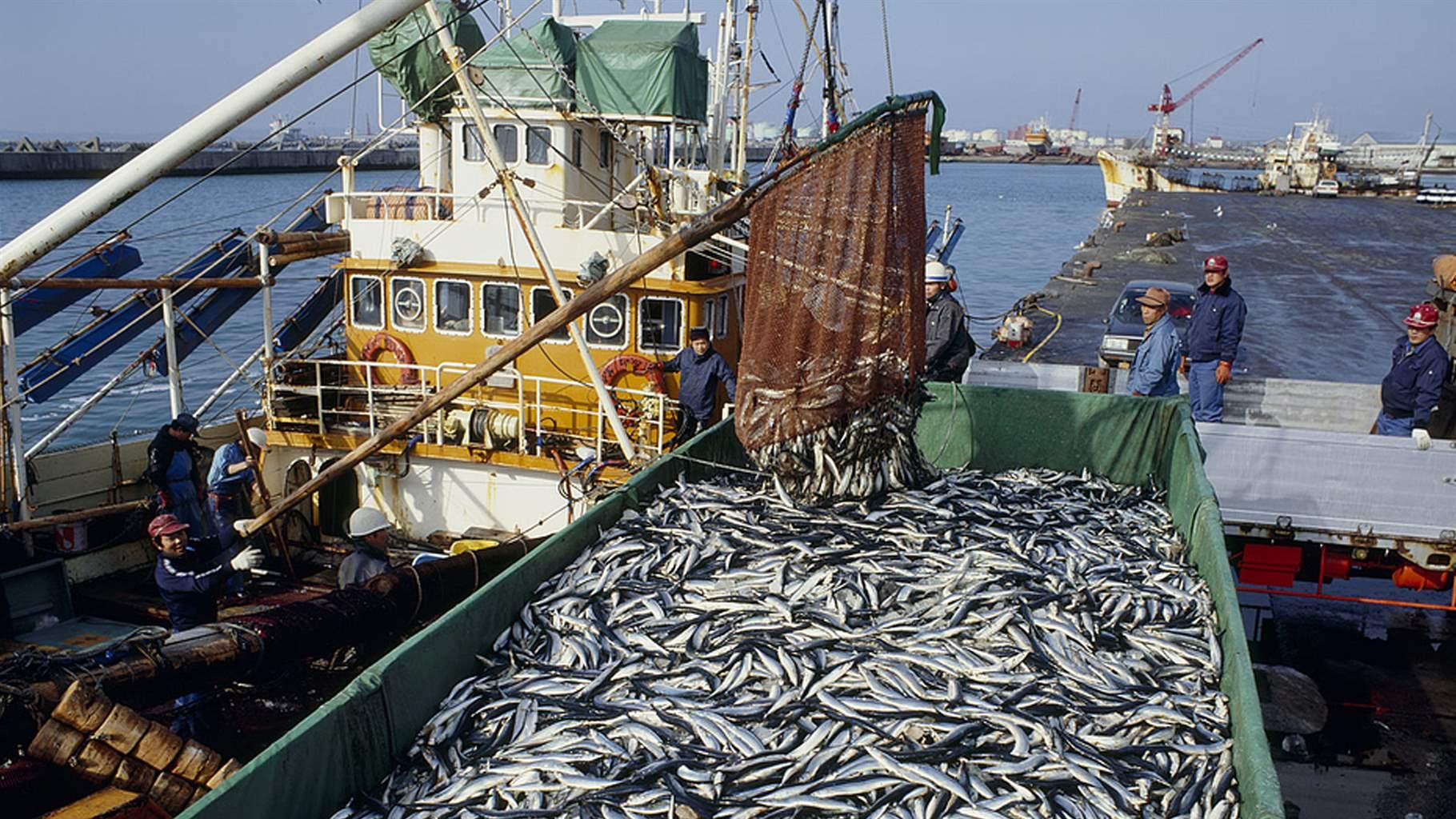 Penegakan Hukum Illegal Fishing Yang Kian Marak 4