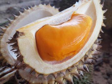 Buah Ini Mirip Dengan Buah Durian, Apa Namanya 8