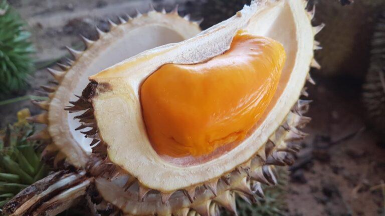 Buah Ini Mirip Dengan Buah Durian, Apa Namanya 1