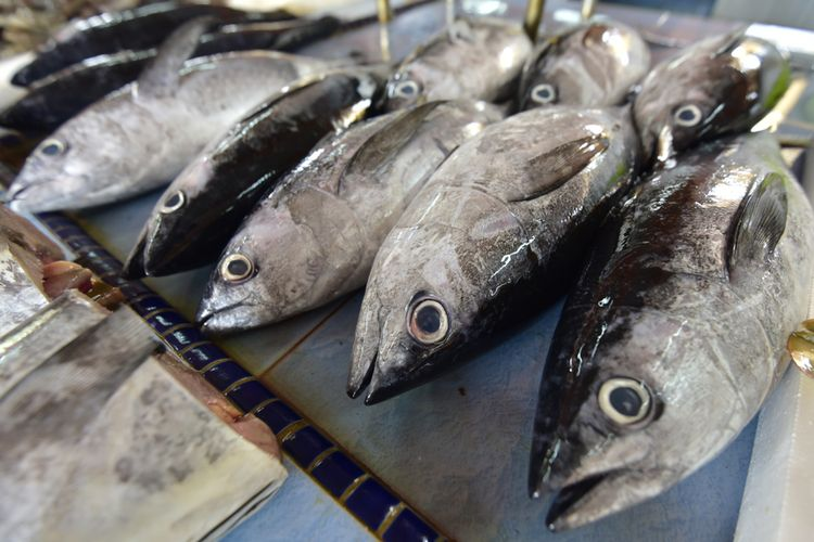 6 Jenis Ikan Laut Yang Sering ditemui Nelayan Indonesia 3