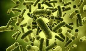 Gambar Bakteri Jahat