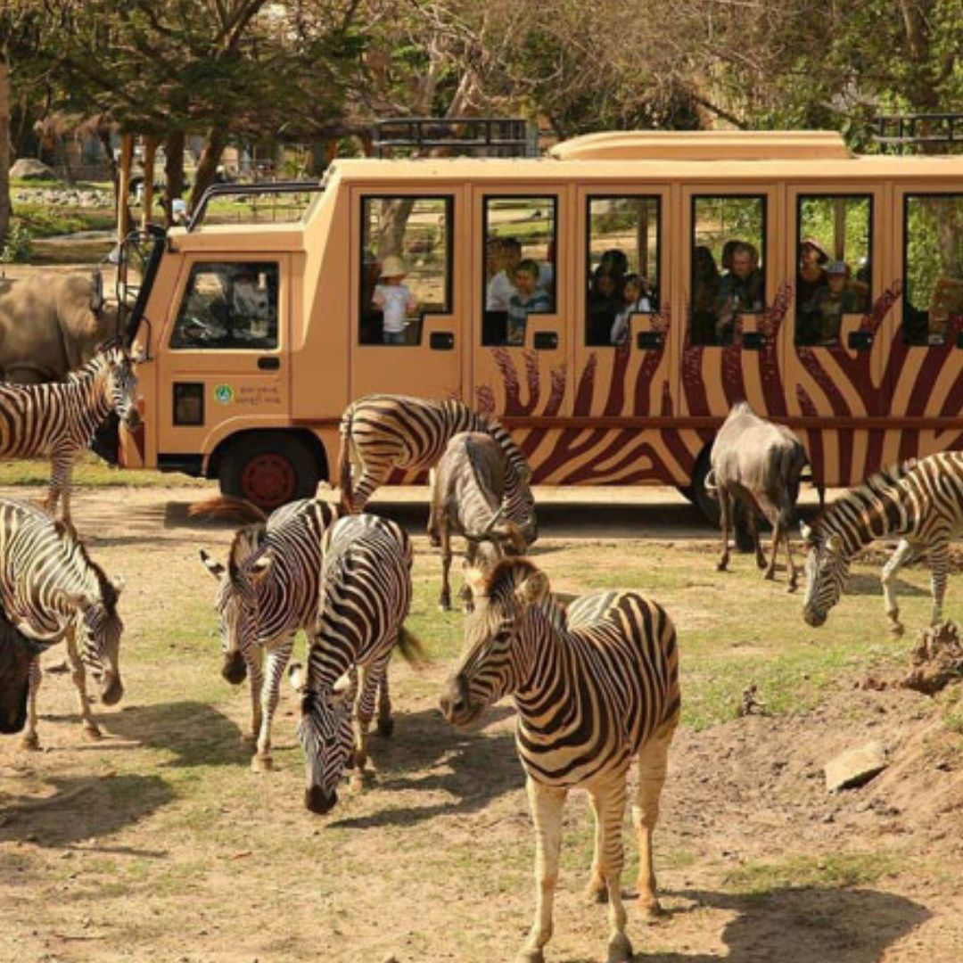 Foto: Bali Safari Park