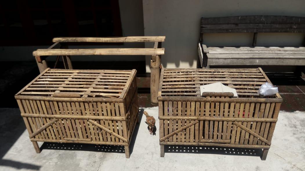 kandang ayam sederhana (sumber gambar : dok. pribadi)