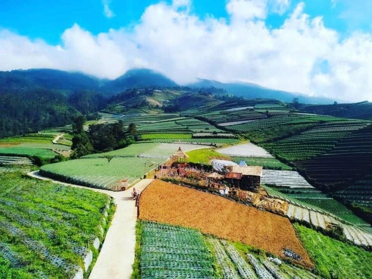 pemandangan sawah terasiring di dusun nampan, desa sukomakmur, kecamatan kajoran, kabupaten magelang di waktu pagi hari