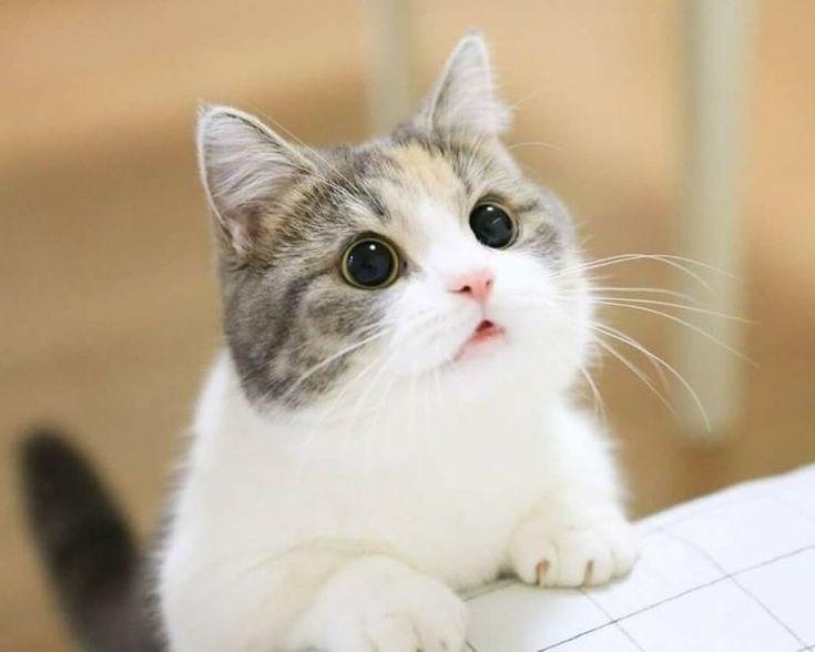 Beberapa Mitos dan Fakta Tentang Kucing Yang Ada Di Masyarakat 4