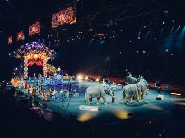 Alasan Mengapa Serigala Tidak Ada Dalam Pertunjukan Sirkus 3
