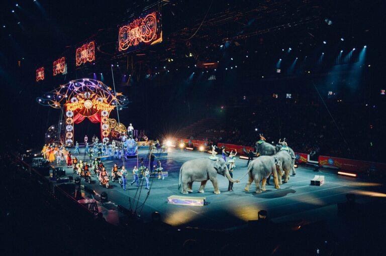 Alasan Mengapa Serigala Tidak Ada Dalam Pertunjukan Sirkus 1
