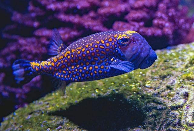Geliat Bisnis Ikan Hias Yang Menggiurkan 3
