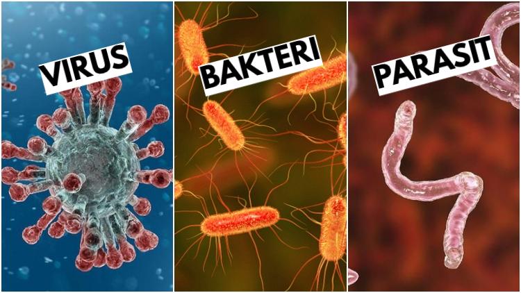 Perbedaan Bakteri Virus Dan Parasit