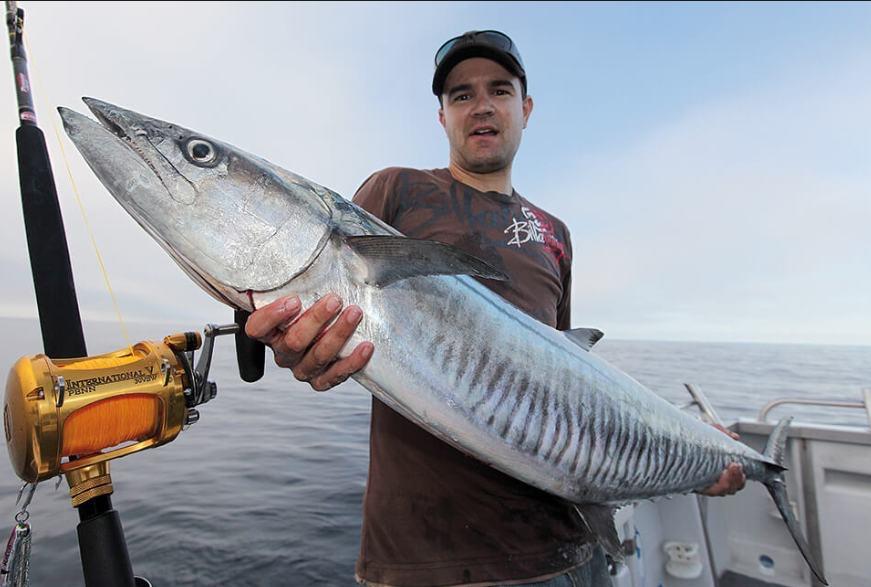 6 Jenis Ikan Laut Yang Sering ditemui Nelayan Indonesia 7