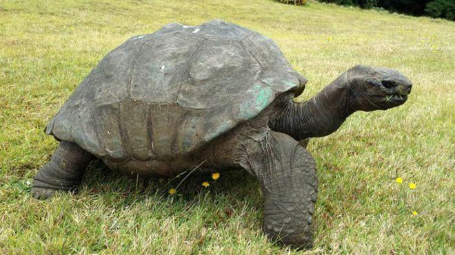Jonathan, kura-kura yang berusia 189 tahun