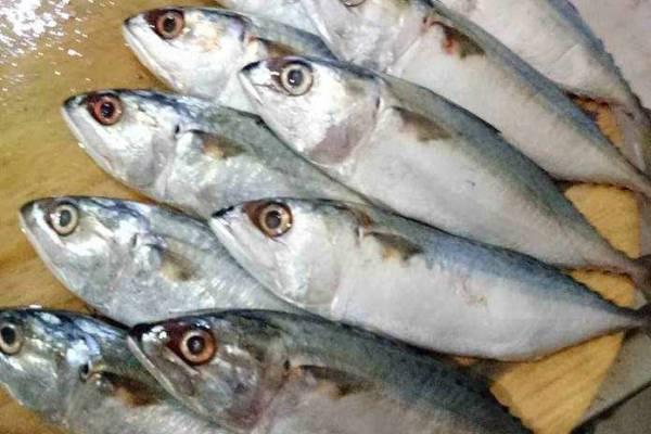 6 Jenis Ikan Laut Yang Sering ditemui Nelayan Indonesia 8