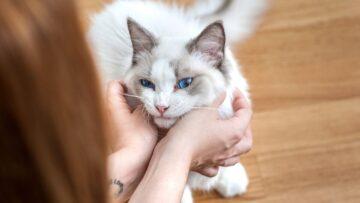 Beberapa Mitos dan Fakta Tentang Kucing Yang Ada Di Masyarakat 14