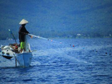 6 Jenis Ikan Laut Yang Sering ditemui Nelayan Indonesia 9