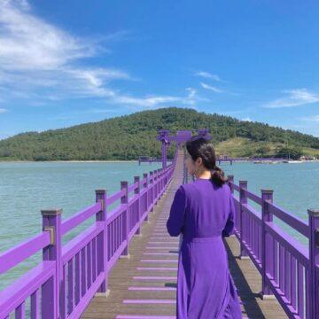 Destinasi Pulau Ungu di Korsel, Surganya Pecinta Warna Ungu 8