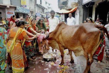 Kecintaan akan Sapi di India dalam Pandangan Sosial-Ekonomi 1